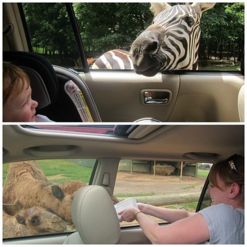 Safari Park 9-1-14 2