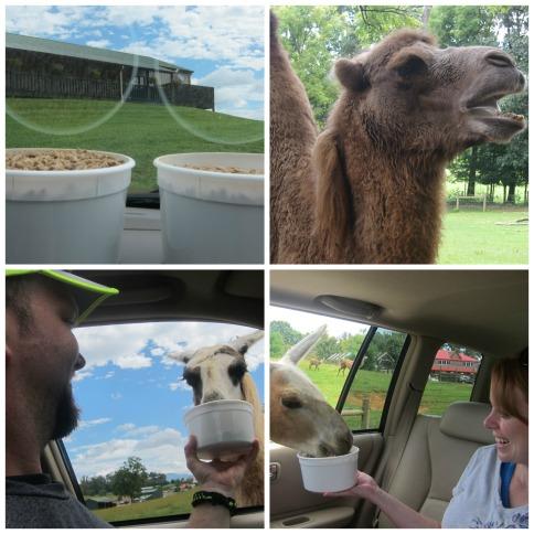Safari Park 9-1-14