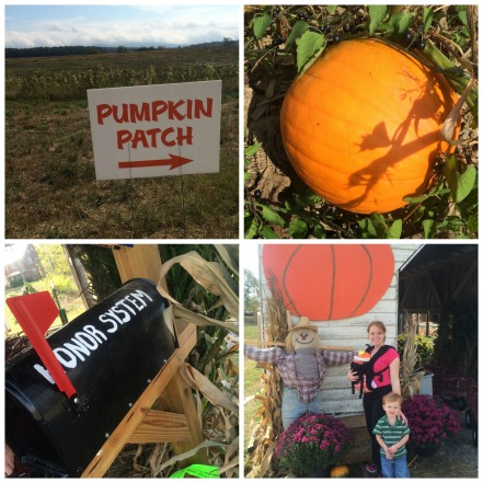 Pumpkin patch 2014 - 1
