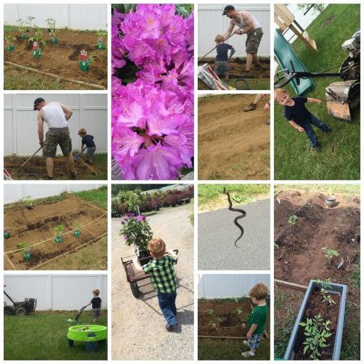 5-16-15 garden
