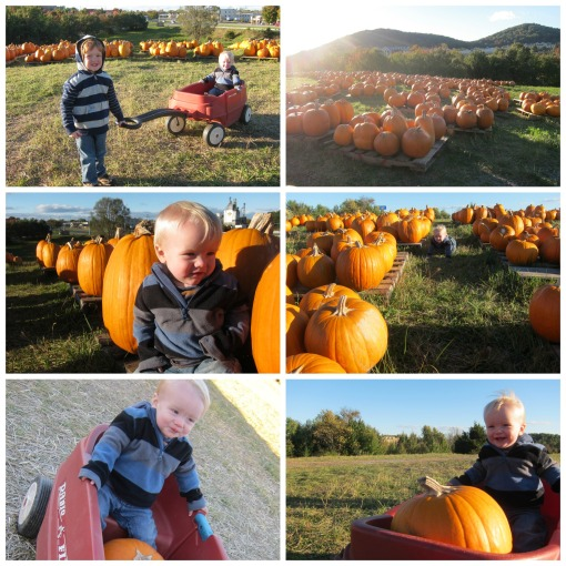 Pumpkin patch 10-17-15